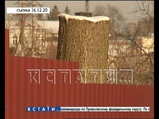 Чиновников Первомайска, укравших ёлку у местной жительницы - уличили во лжи