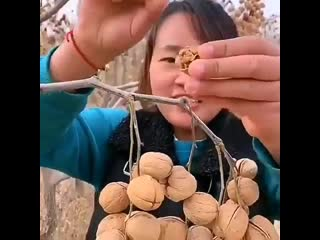 Вот так растут грецкие орехи в Китае😳😳😳