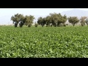 Iran agriculture at a glance