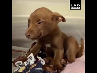 DOG SMILES upon the news of being adopted