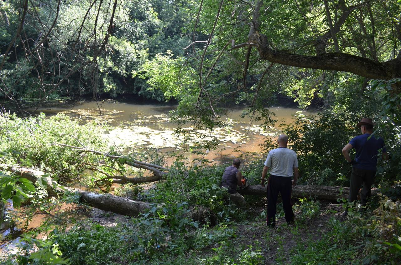 В горпарке Петровска ведутся работы по расчистке реки Медведицы от упавших деревьев