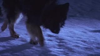 Зов предков. / 1997 год. Канада - The Call of the Wild - Dog of the Yukon