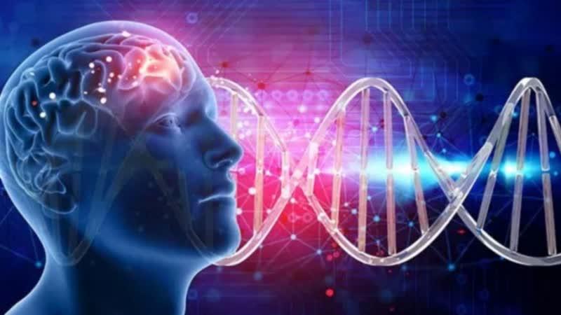 Внутри человеческого тела 3 серия Формирование мозга