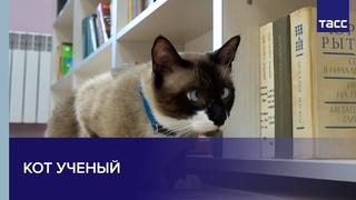 Кот ученый. В калининградской библиотеке появился хвостатый сотрудник
