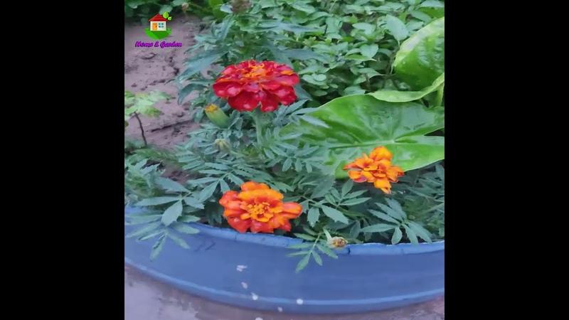 Reuse Old Fiber Water Tank for Planters Short