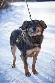 «Территория Спасения» предлагает собак безвозмездно