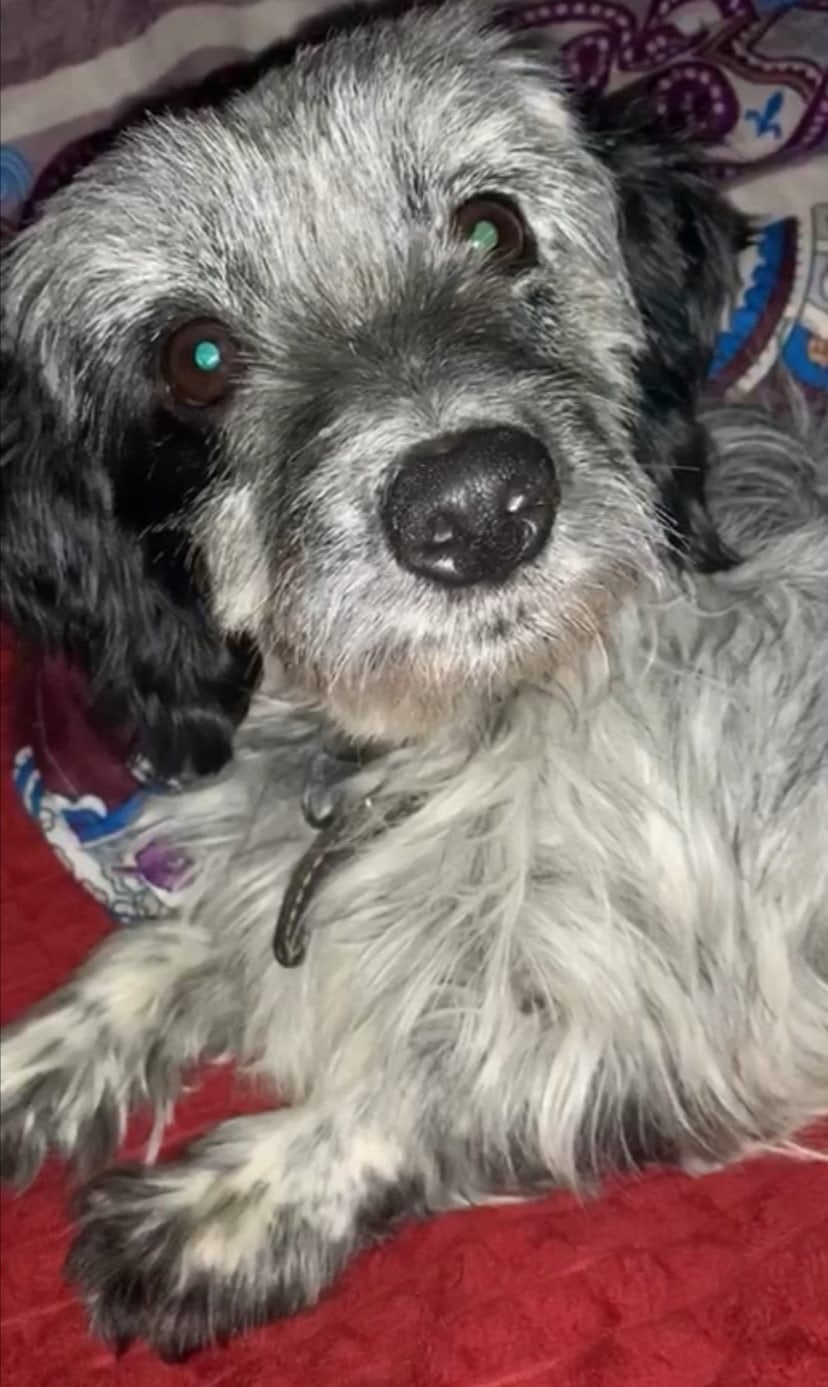 Пропал пёс, улица Бованенко 6, если кто видел позвоните по телефону 89004013948